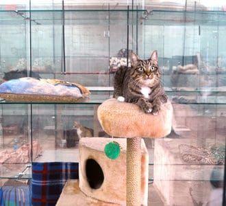 Гостиница для домашних животных в Москве