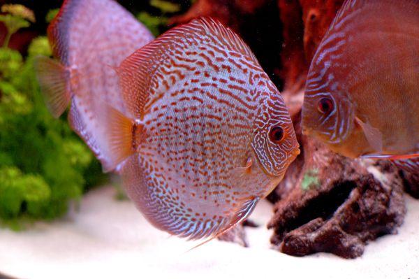 Использование аквариума в эстетических и научных целях