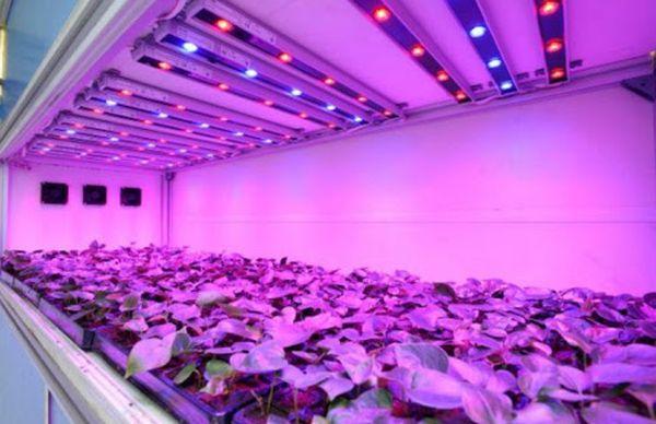 Светодиодные светильники для растений – правильное освещение в помещении