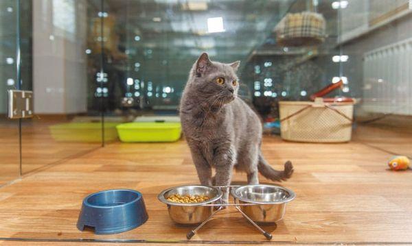 Передержка котов в Москве – максимально комфортные условия